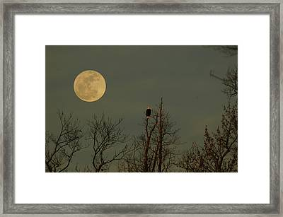 Bald Eagle Watching The Full Moon Framed Print by Raymond Salani III