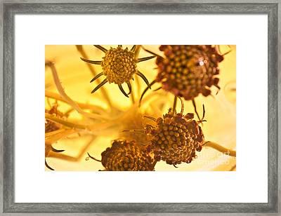Bali Thyme Framed Print by Bobby Villapando