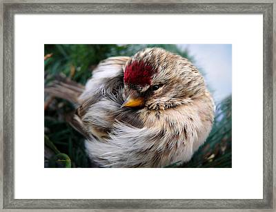 Ball Of Feathers Framed Print by Christina Rollo