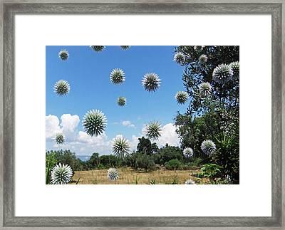 Balls Framed Print by Eric Kempson