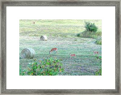 Bambi And The Twins  Framed Print by Will Borden