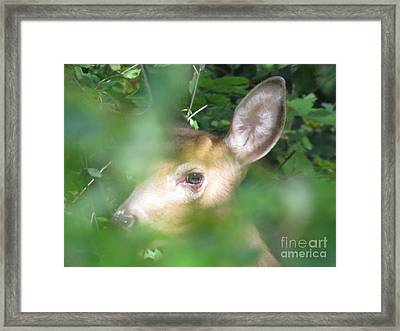 Bambi In The Woods Framed Print by David Lankton