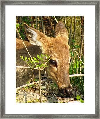 Bambi Framed Print by Arielle Cunnea