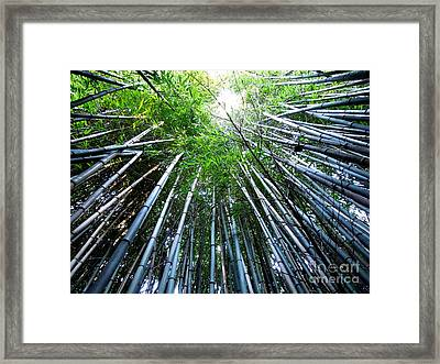 Bamboo . A Renewable Resource Framed Print by Renee Trenholm
