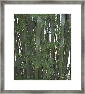 Bamboo 3 Framed Print by To-Tam Gerwe