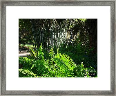 Bamboo And Fern Framed Print by Lew Davis