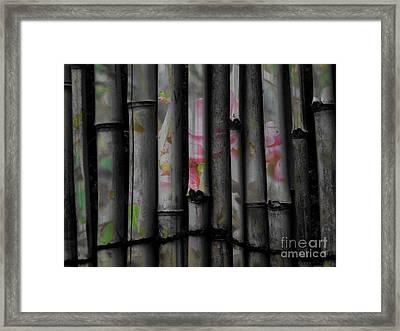 Bamboo Blossom Framed Print by Charles Majewski