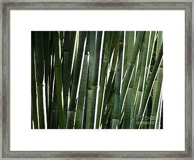 Bamboo Canes Framed Print by Lew Davis