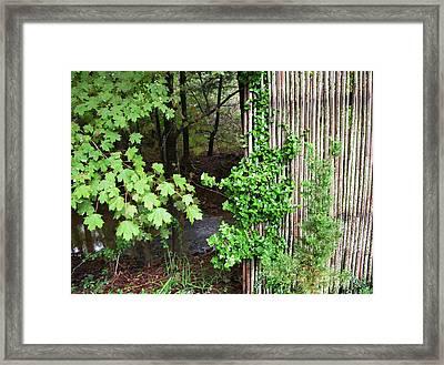 Bamboo Fence Framed Print by Daniel P Cronin