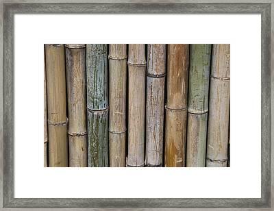 Bamboo Fence Framed Print by Tilen Hrovatic