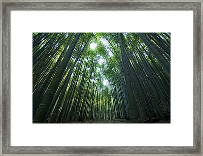 Bamboo Forest Framed Print by Aaron S Bedell