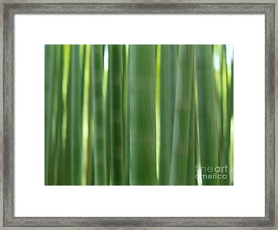 Bamboo Forest Abstract Closeup Of Stems Framed Print by Oleksiy Maksymenko