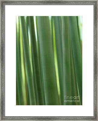 Bamboo Forest Abstract Closeup Framed Print by Oleksiy Maksymenko