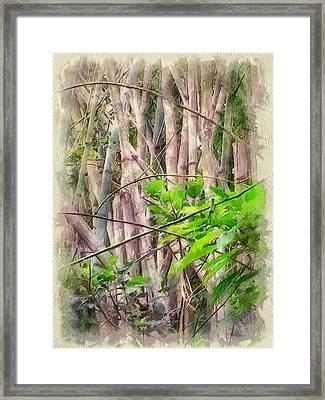 Bamboo Forest At Lamma Island Hong Kong Framed Print by Yury Malkov