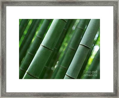 Bamboo Forest Closeup Of Stems Framed Print by Oleksiy Maksymenko