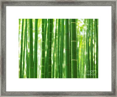 Bamboo Forest Culms Closeup Abstract Background Framed Print by Oleksiy Maksymenko