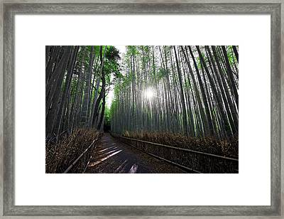 Bamboo Forest Path Of Kyoto Framed Print by Daniel Hagerman