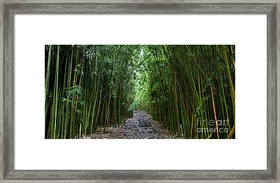 Bamboo Forest Trail Hana Maui Framed Print by Dustin K Ryan