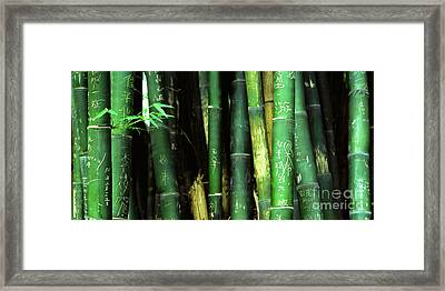 Bamboo Graffiti Pano - Sichuan Province Framed Print by Anna Lisa Yoder