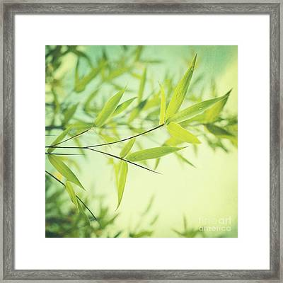 Bamboo In The Sun Framed Print by Priska Wettstein