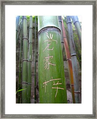 Bamboo Framed Print by Michael Fitzpatrick