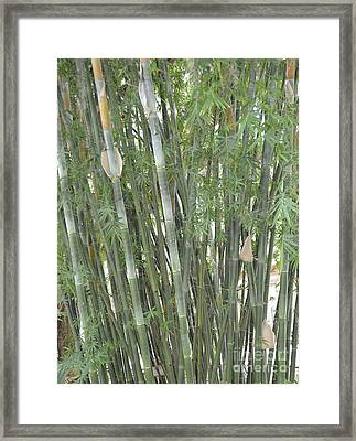 Bamboo Framed Print by To-Tam Gerwe