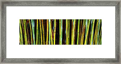 Bamboo Trees In A Botanical Garden Framed Print by Panoramic Images