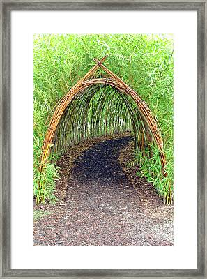 Bamboo Tunnel Framed Print by Olivier Le Queinec