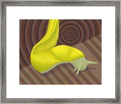 Banana Slug Framed Print by Nathan Marcy