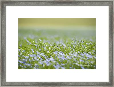 Bands Of Blue Framed Print by Anne Gilbert