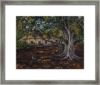 Banyan Tree Framed Print by Darice Machel McGuire