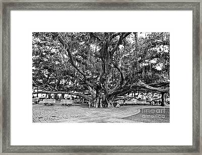 Banyan Tree Framed Print by Scott Pellegrin