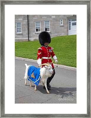 Baptiste The Goat Framed Print by Edward Fielding