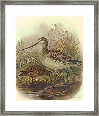 Bar Tailed Godwit And Chatham Island Snipe Framed Print by J G Keulemans