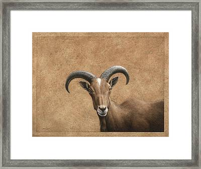 Barbary Ram Framed Print by James W Johnson