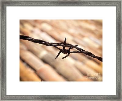 Barbwire Framed Print by Sinisa Botas