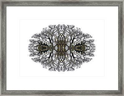 Bare Tree Framed Print by Debra and Dave Vanderlaan