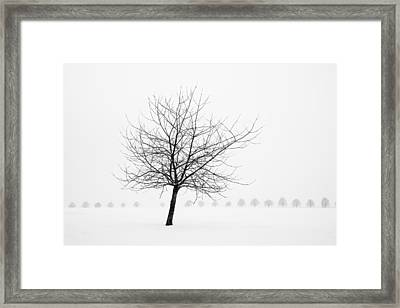 Bare Tree In Winter - Wonderful Black And White Snow Scenery Framed Print by Matthias Hauser