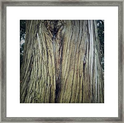 Bark Framed Print by Les Cunliffe