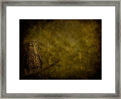 Barking Owl Framed Print by Shari Mattox