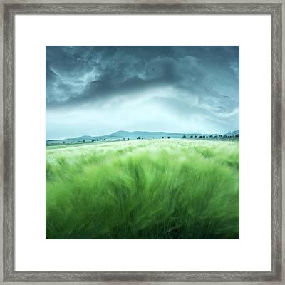 Barley Field Framed Print by Floriana Barbu