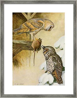 Barn And Long Eared Owls Framed Print by Louis Agassiz Fuertes