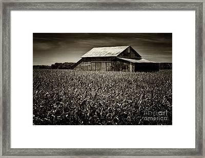 Barn In Cornfield Framed Print by Todd Bielby