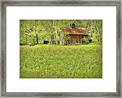 Barn In Wild Turnips Framed Print by Cricket Hackmann
