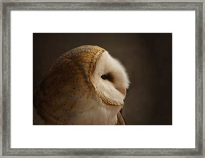 Barn Owl 3 Framed Print by Ernie Echols
