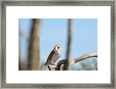 Barn Owl Framed Print by David S Reynolds