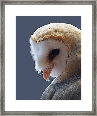 Barn Owl Dry Brushed Framed Print by Ernie Echols