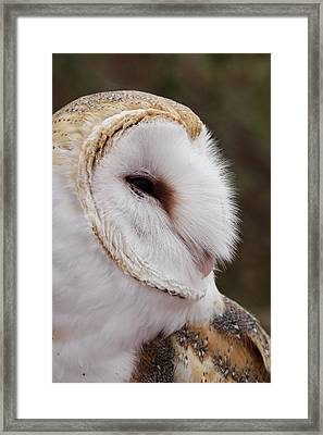 Barn Owl Profile Framed Print by Theo