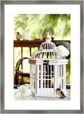 Barn Swallow Framed Print by Stephanie Frey