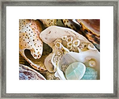 Barnacles And Shells Framed Print by Colleen Kammerer